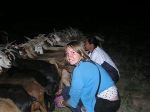 Volunteers in Mongolia practice milking goats
