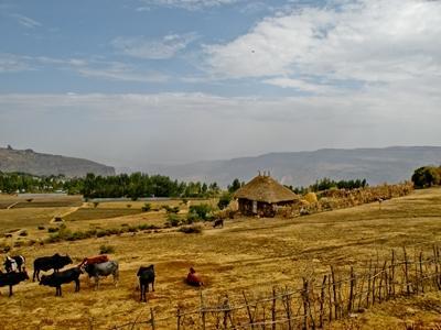 A farm in Ethiopia.