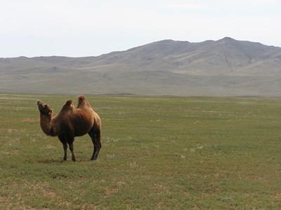 Voluntourism in Mongolia