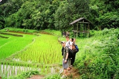 Volunteers visit local fields while on projects in Thailand with Projects Abroad