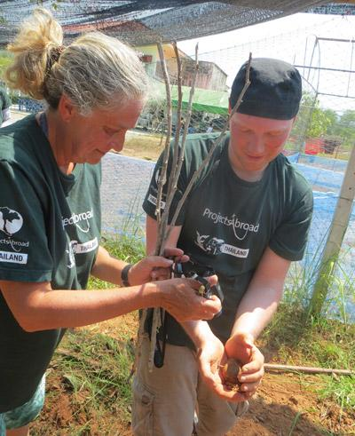 Volunteers work on the land on the Farming project in Thailand with Projects Abroad