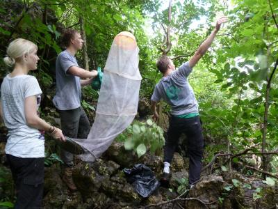 Volunteers protect butterflies on the butterfly project in  Costa Rica with Projects Abroad