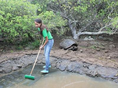 A volunteer cleaning the pond at the tortoise breeding center in Ecuador.