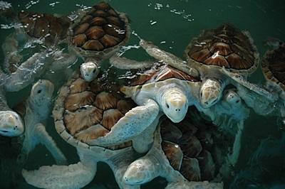Volunteer Environmental work in Mexico