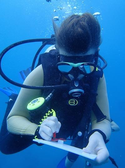 斐濟環保義工在海底觀察生態並進行記錄