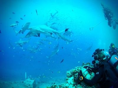 A volunteer participates in an observation dive on the Shark Conservation project in Fiji.