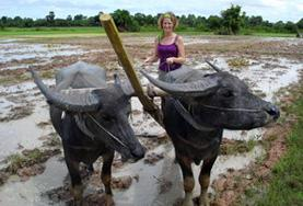 Volunteer 柬埔寨