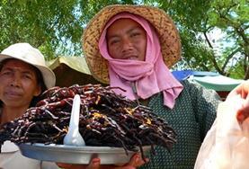 Volunteer in Cambodia: Language Courses