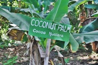 義工在牙買加閱讀指示牌學會當地的土話