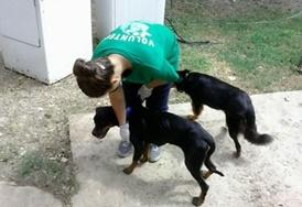 Volunteer Veterinary Medicine & <br />Animal Care