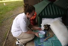 國際義工 獸醫與動物關愛項目