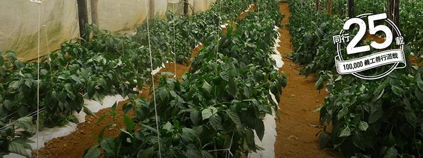 參與Projects Aboard項目在海外的有機農場進行義工工作