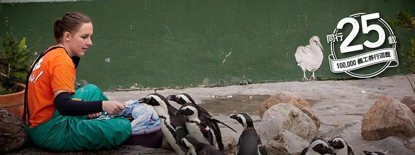 義工在國外的動物中心幫忙照顧企鵝