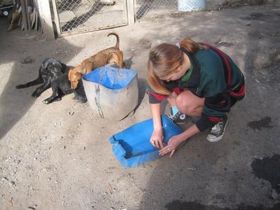在阿根廷動物關愛義工項目協助犬隻庇護所的日常維護工作